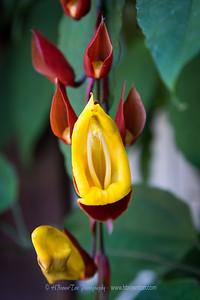 Local flower...