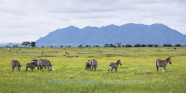 The planes of the Serengeti