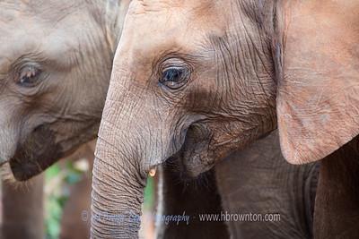 David Sheldrick Wildlife Trusts' Orphans' Project