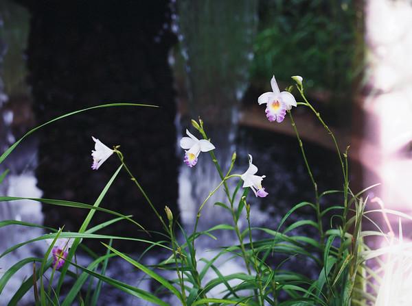 Orchid Scene