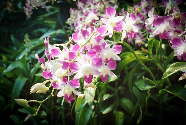 Botanicalistic