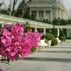 Pink Fullerton