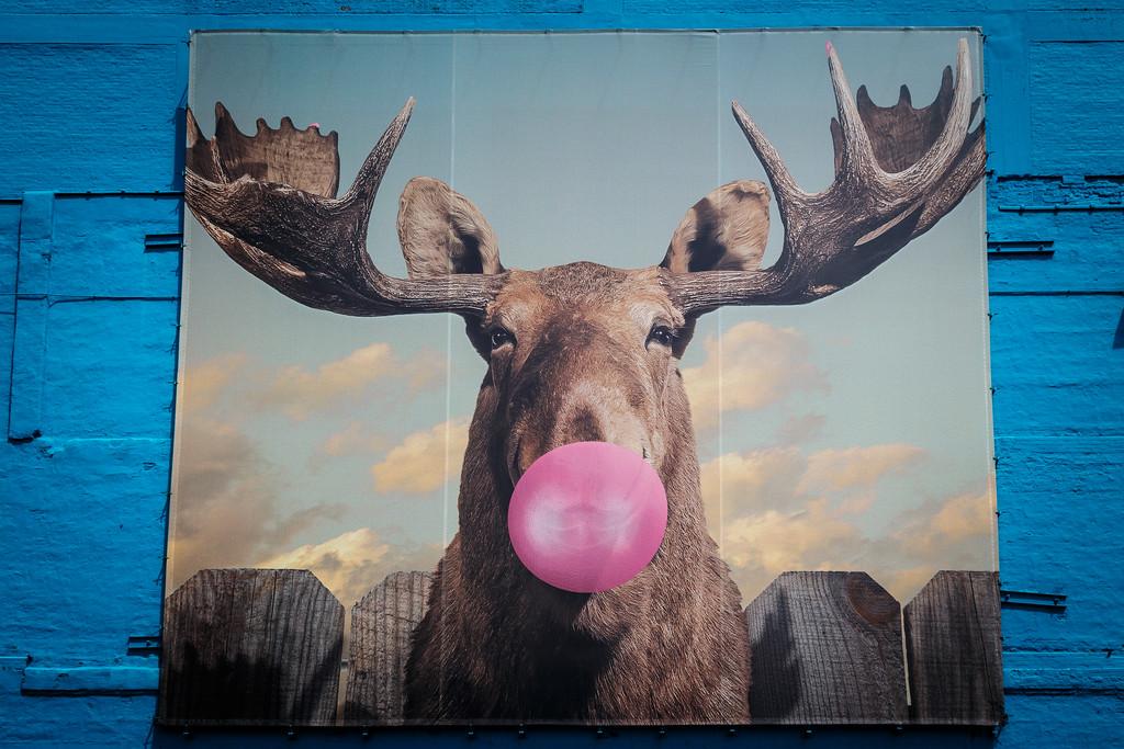 Vinod Kalathil - Chicago - Jacob Watts - Moose Bubblegum Bubble