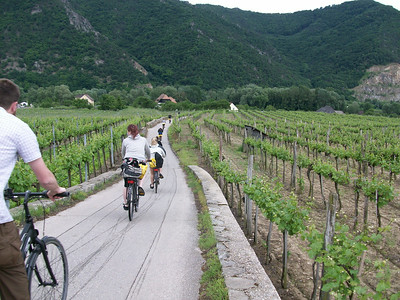 Biking through a vineyard in the Wachau Valley (central Austria).