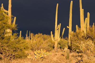 SaguaroNP_CRW_1002_060301_