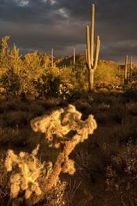 SaguaroNP_CRW_1017_060301