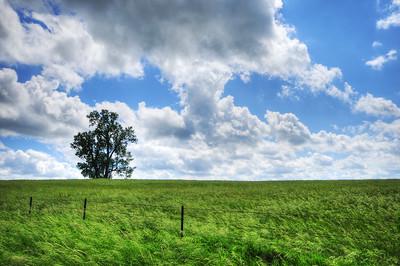 Eastern Iowan field on a windy day.