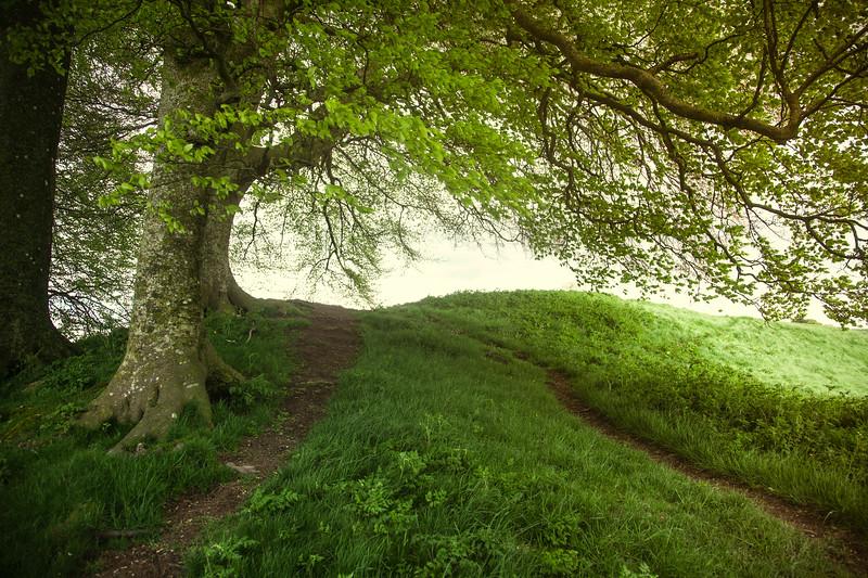 Trees on Avebury Henge