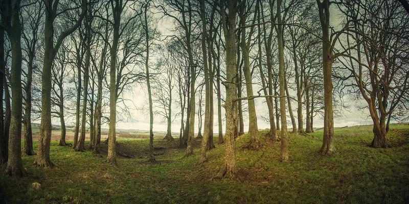 Barrows on Overton Hill