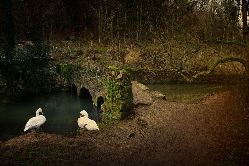 Roman Bridge with swans over the Bybrook. Castle Combe, Wiltshire, Great Britain