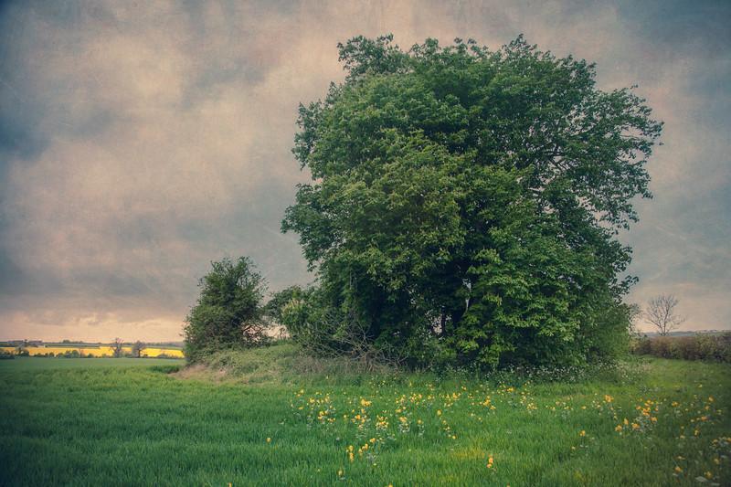 Chestnut Trees on the Long Barrow