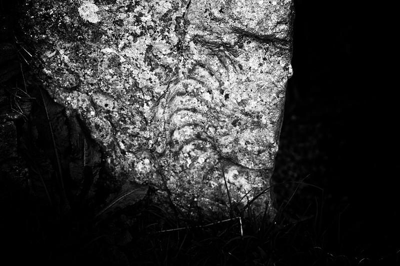 Fossil Ammonite Impression