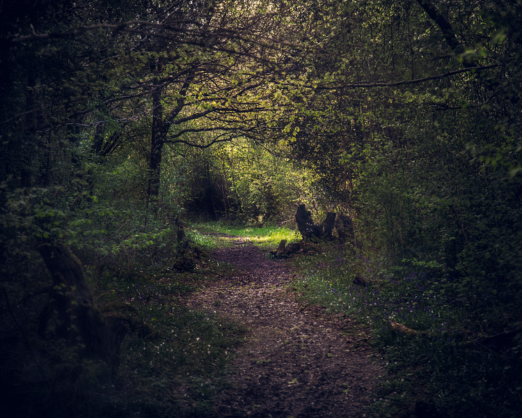 The Path Through The Forest