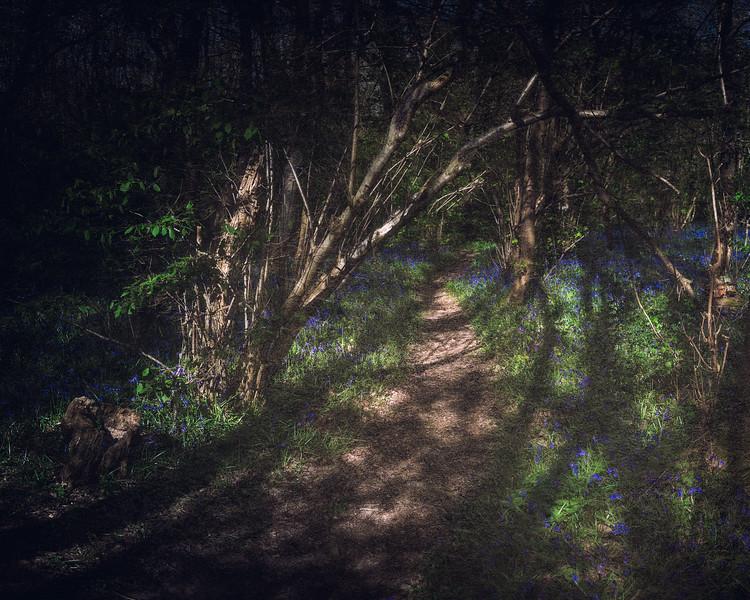 Conkwell Wood