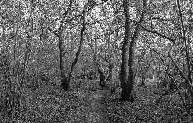 Alder Lined Trails