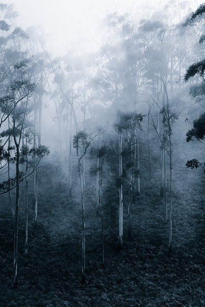 Trees and Fog # 2 - Eerie
