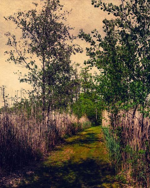 Trail Through The Reeds At Bayard Cutting Arboretum