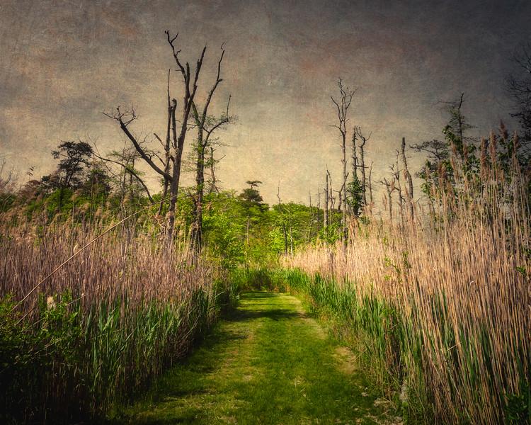 Bayard Cutting Arboretum Trails