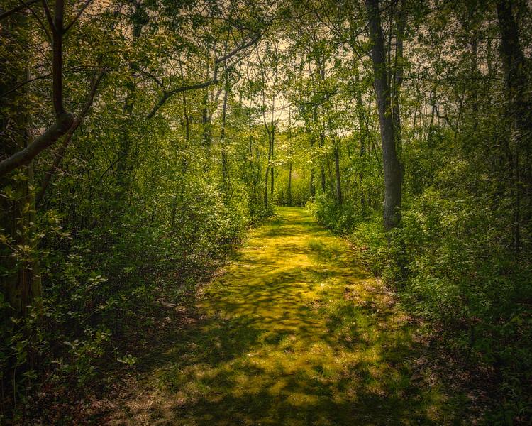 Trails At Bayard Cutting Arboretum