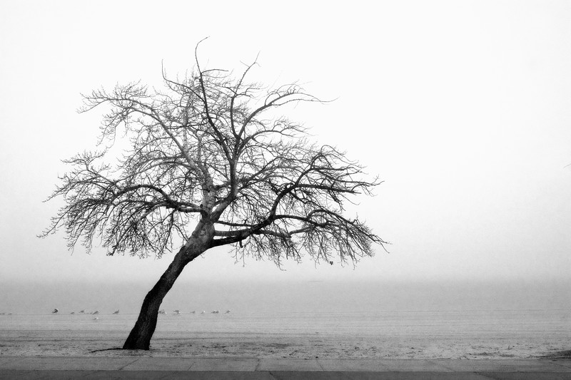 Long Island Landscape: Long Island Sound in Fog. Oyster Bay, Nassau County, Long Island, New York.