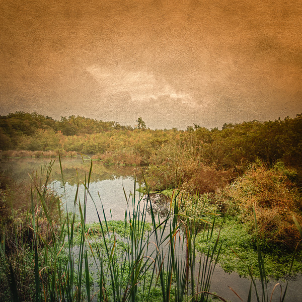 Long Island Landscape, Charles T Church Nature Preserve, Shu Swamp, Oyster Bay, Nassau County, New York