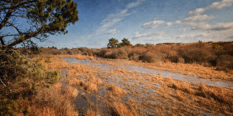 Hither Hills State Park, Montauk, South Fork of Long Island, Suffolk County, New York