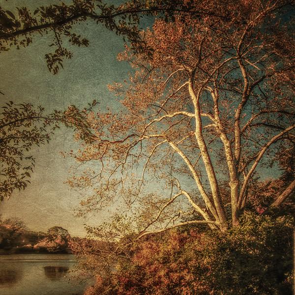Frank Melville Memorial Park, Setauket MIll Pond, East Setauket, Suffolk County, Long Island, New York