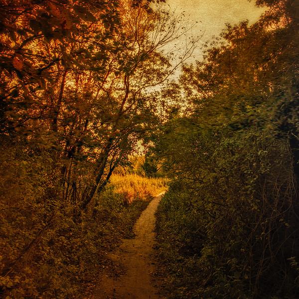 Stillwell Woods Nature Preserve, Syosset, New York