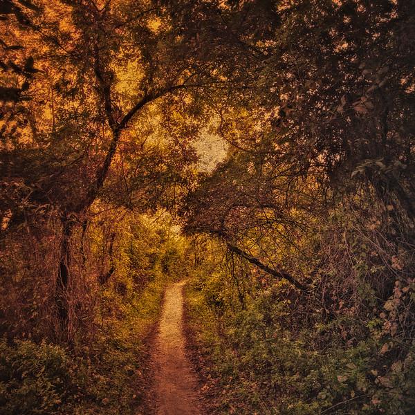 Stillwell Woods Nature Preserve, Syosset, Nassau County, Long Island, New York