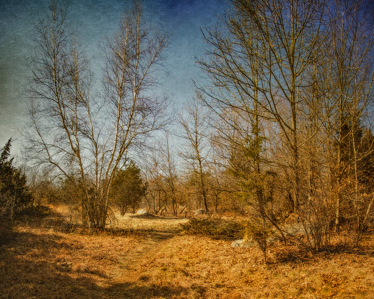 New England Landscapes: Dogtown Commons, Gloucester, Cape Ann, Wessex County, Massachusetts