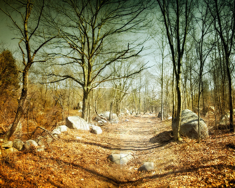 New England Landscapes: Moraine Trail Through Dogtown Commons, Gloucester, Cape Ann, Wessex County, Massachusetts