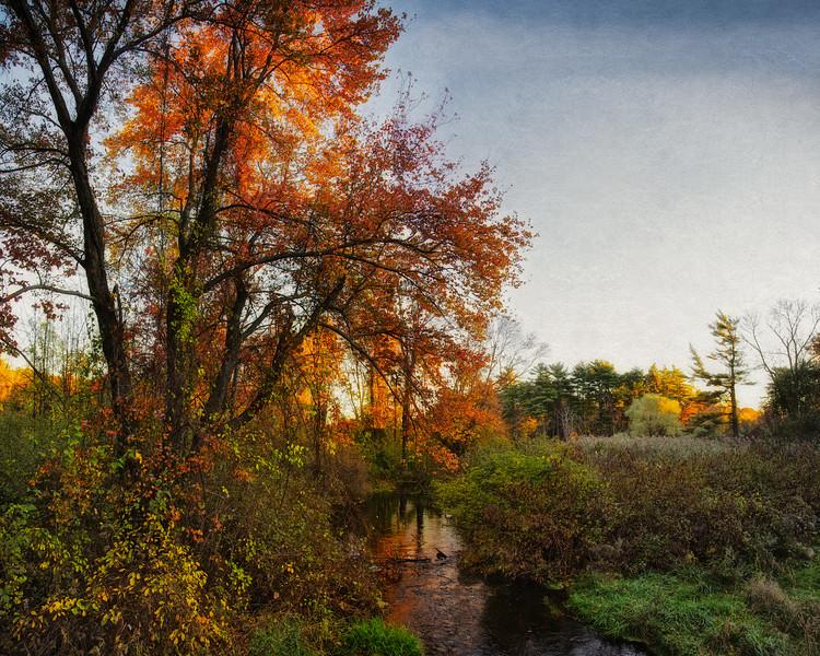 New England Landscapes: Trees along Creek Near the Wayside Inn, c. 1716, Sudbury, Middlesex County, Massachusetts