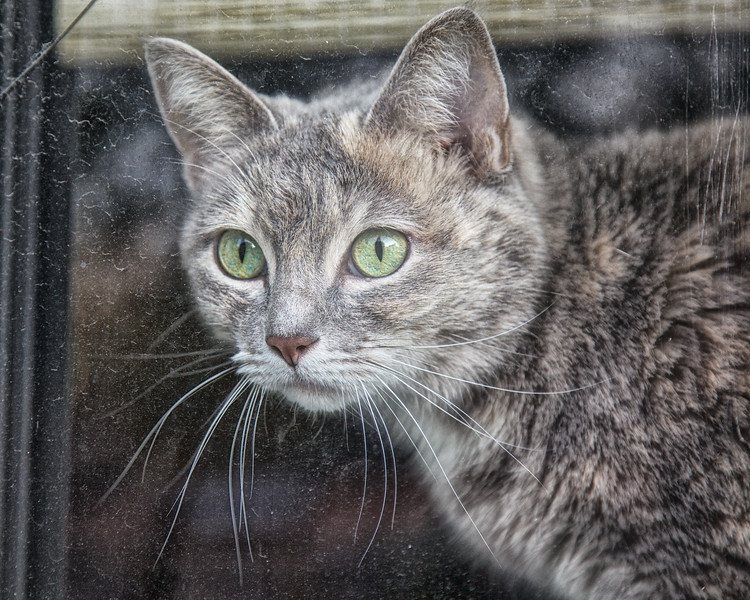Cat in Window, Marblehead, Essex County, Massachusetts
