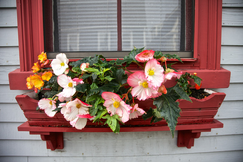 New England Architecture: Window Box With Flowers. Marblehead, Essex County, Massachusetts