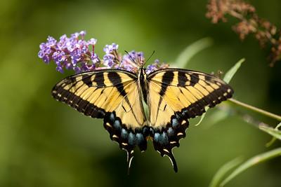 Fairfax, Meadowlark Botanical Gardens