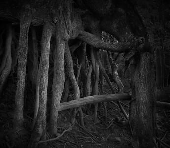 VA_ALG_Root home of the Hobit