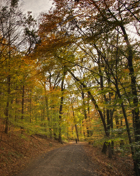Sleepy Hollow Landscapes: Rockefeller State Park Preserve in Fall, Sleepy Hollow, Pleasantville, Westchester County, New York
