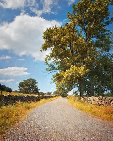 Sleepy Hollow Landscape: Field Road at Stone Barns, Pocantico Hills, Tarrytown, Westchester County, New York