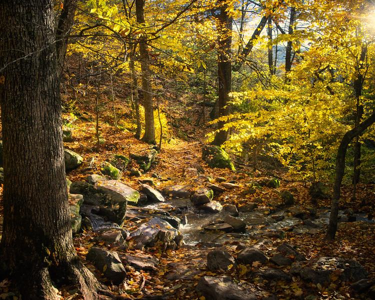 Trail Across the Creek