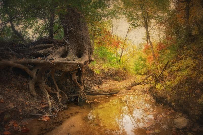 Creek At Burrell Park