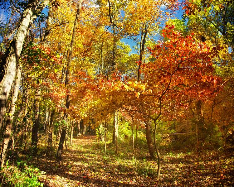 Autumn on Elk Trail