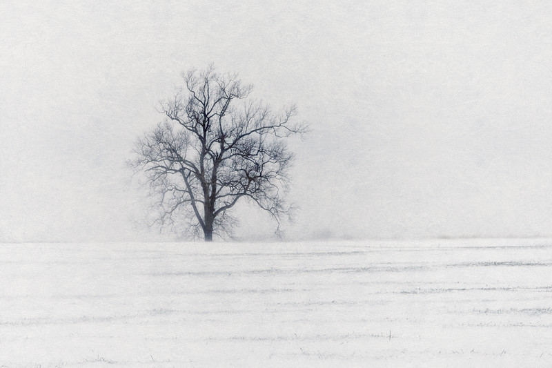 The Tree in Snow