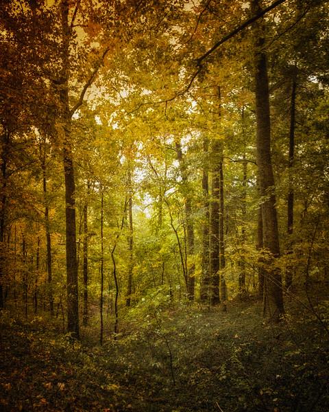 Woods near Monte Cassino Shrine, 1870, Near Saint Meinrad, Spencer County, Indiana