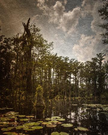 Lowcountry Landscapes: Lillypads in Cypress Gardens Swamp. Charleston, Moncks Corner, South Carolina