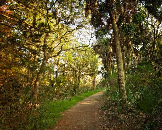 Lowcountry Photos: Trail to the Beach on Botany Bay Plantation, Edisto Island, Charleston County, South Carolina