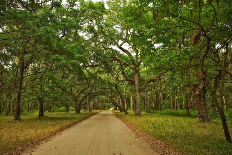 Lowcountry Photos: Avenue of Oaks on Botany Bay Plantation, Edisto Island, Charleston County, South Carolina