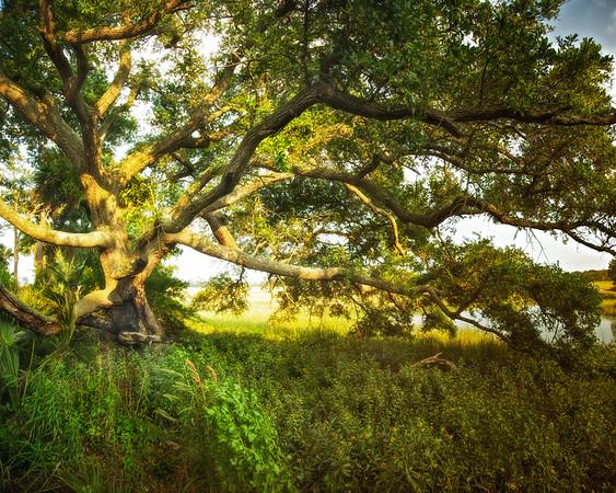 Lowcountry Photos: Oak Tree on Store Creek Next to Edisto Island Serpentarium, Edisto Island, Charleston County, South Carolina