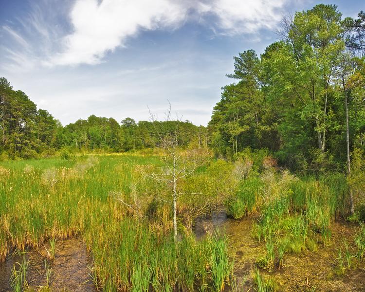 Jamestowne Settlement: Wetlands Inland From the Settlement. Historic Jamestowne, Jamestown Island, Virginia