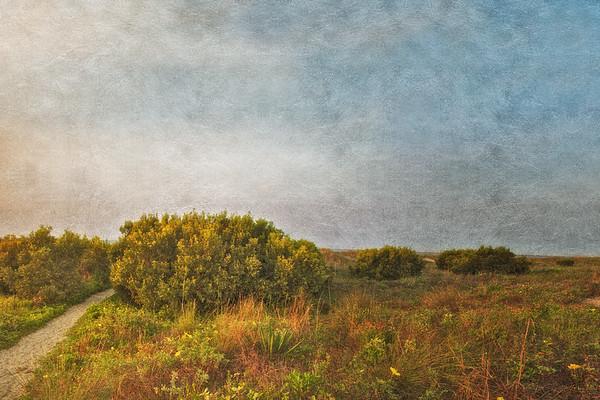 South Carolina Seascapes: Dune Foliage and Path at Sunrise. Sullivan's Island, Charleston, South Carolina