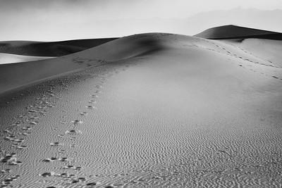 Ephermeral Footsteps